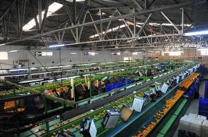 mandalina fabrika
